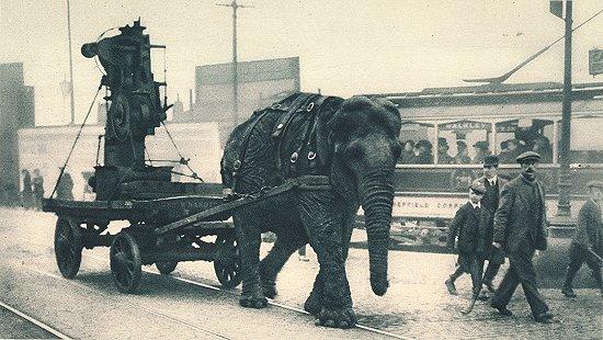 A Lizzie nevű elefánt a sheffieldi utcákon. Forrás: sheffieldhistory.co.uk