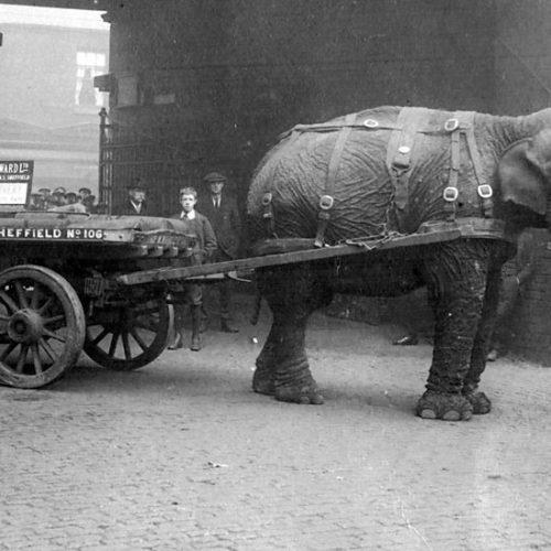 Elefántok a Nagy Háborúban