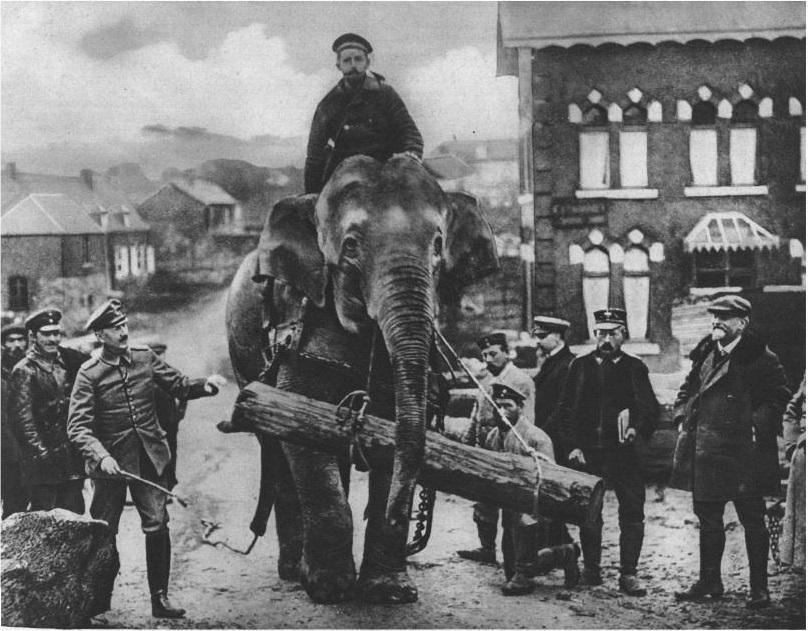 A Jenny nevű elefánt farönkszállítás közben. Forrás: Die Welt Spiegel
