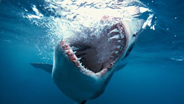 A fiumei cápa; uborkaszezoni sajtókacsa vagy vérengző fenevad?