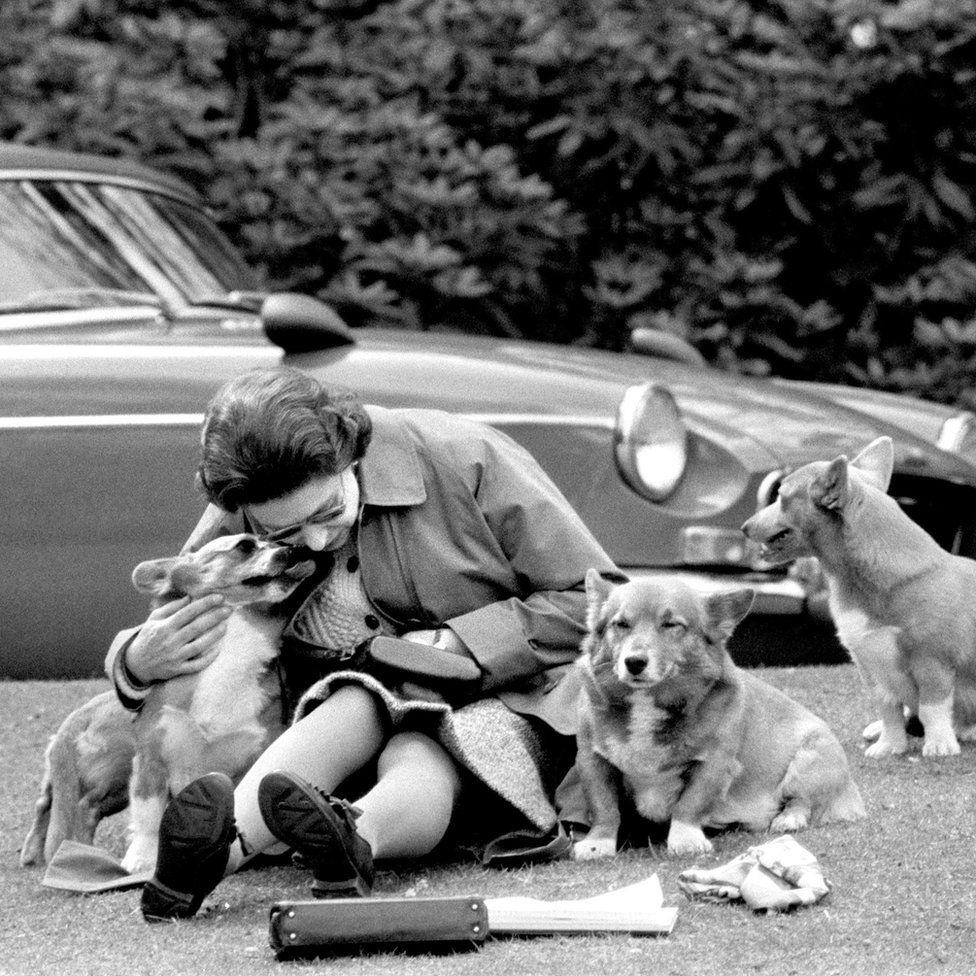 A királynő több mint 30 corgist (kutyát) tulajdonolt, közülük sokan közvetlen leszármazottai voltak első kutyájának, Susanak. Most már csak kettő van - Holly és Willow.