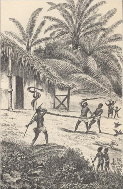 Madagaszkári népszokások: kígyóvadászat (Jókai II., 96. o.)